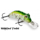 WARTED TOAD 55